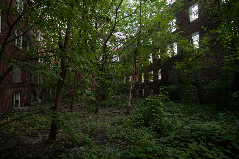 The courtyard in between buildings, heavily overgrown.