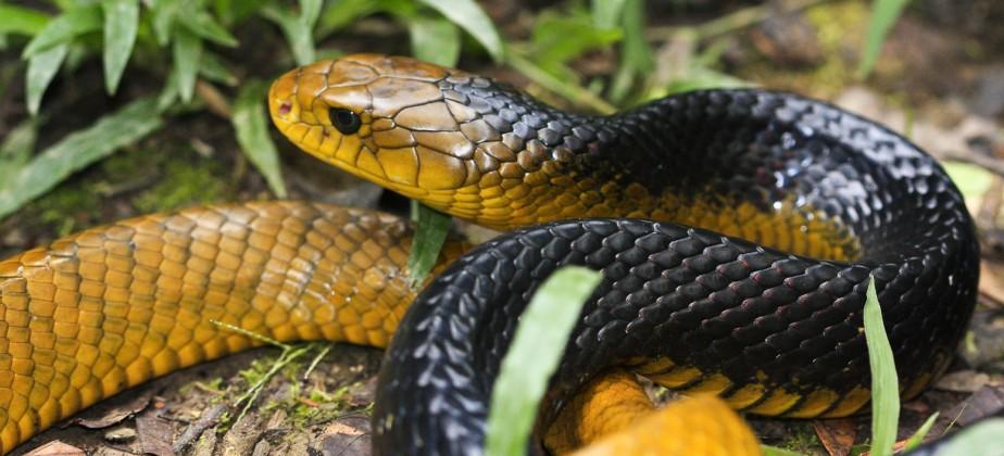 Rat-snake-924x420