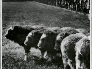 1. þáttur: Sauðnaut, lemúrar og furðuverur Borgesar