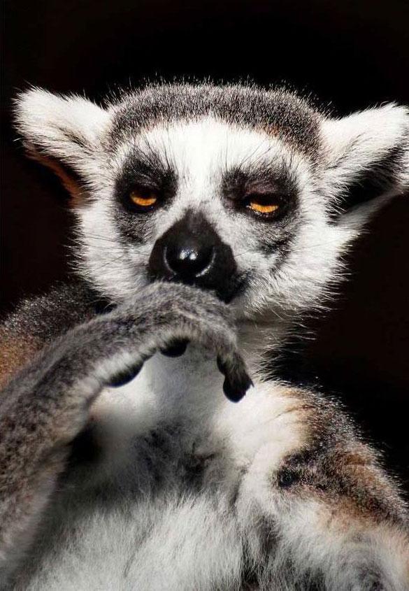 skeptical-lemur