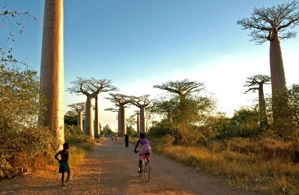 Frá Madagaskar.