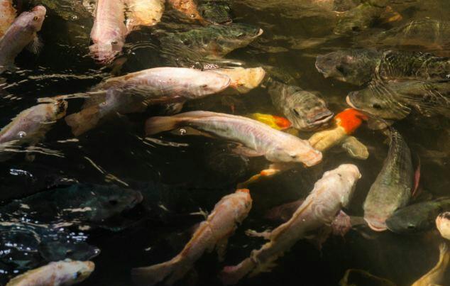 fiskur8