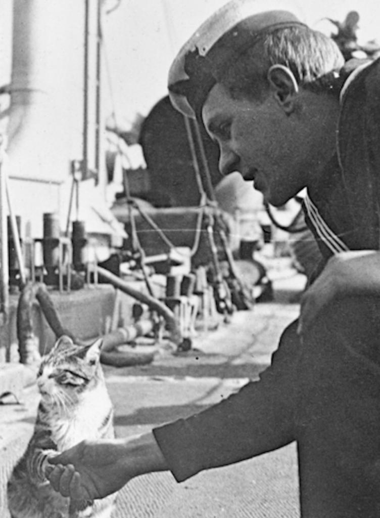Sjóliði á ástralska tundurspillinum HMAS Swan heilsar upp á skipsköttinn Ching. (Australian War Memorial).