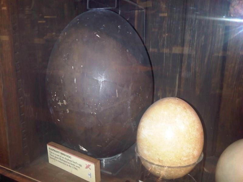 Egg fílastrútsins og strútsegg.