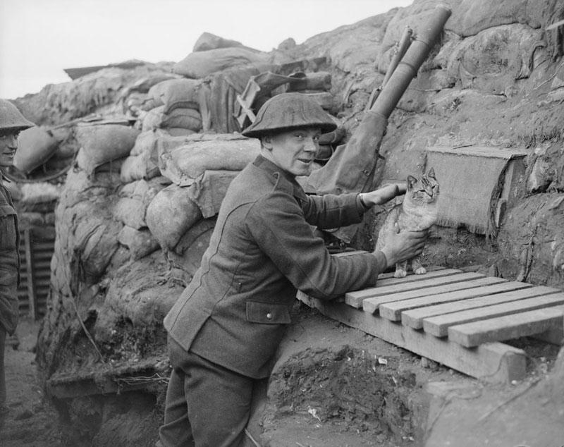 Stórskotaliði gælir við kisa í skotgröfunum í Cambrin í Frakklandi árið 1918. (Imperial War Museum).