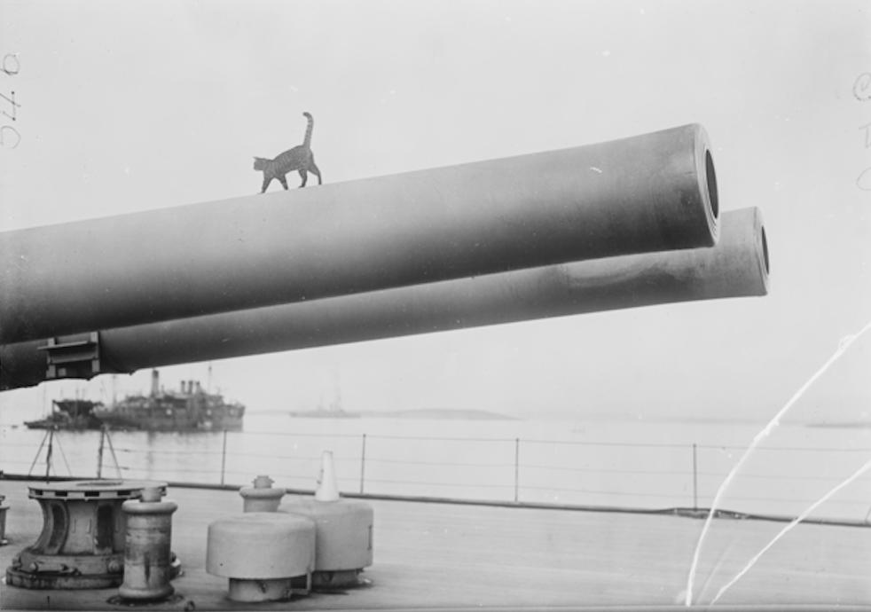Ónefndur skipsköttur trítlar á fallbyssu á breska orrustuskipinu HMS Queen Elizabeth við Gallipoli árið 1915. (Bibliotheque nationale de France).