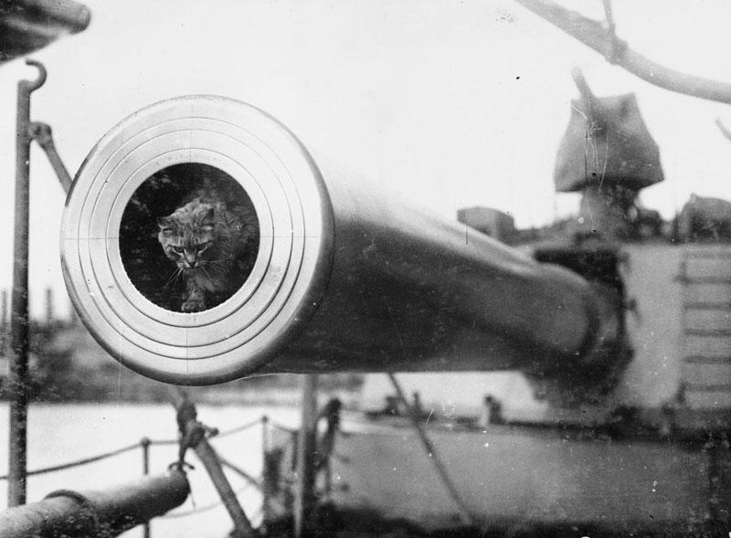 Togo, skipskötturinn vígalegi á hinu fræga breska orrustuskipi HMS Dreadnought. (Imperial War Museum).