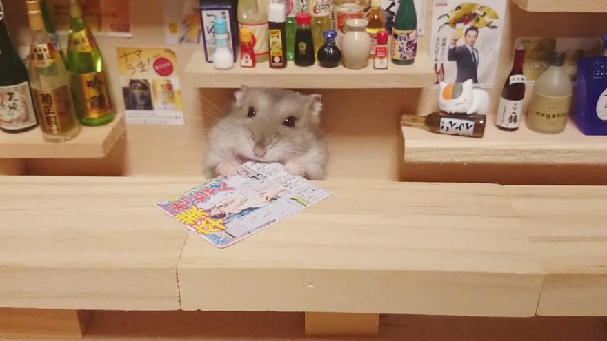hamster-bartender-miniature-bar-kawanabesatou-12