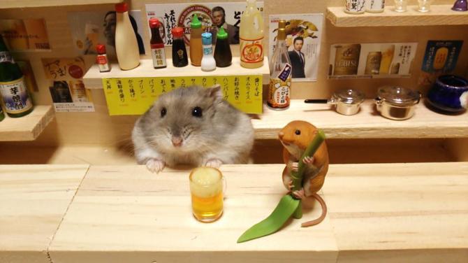 Litlir hamstrar sem barþjónar