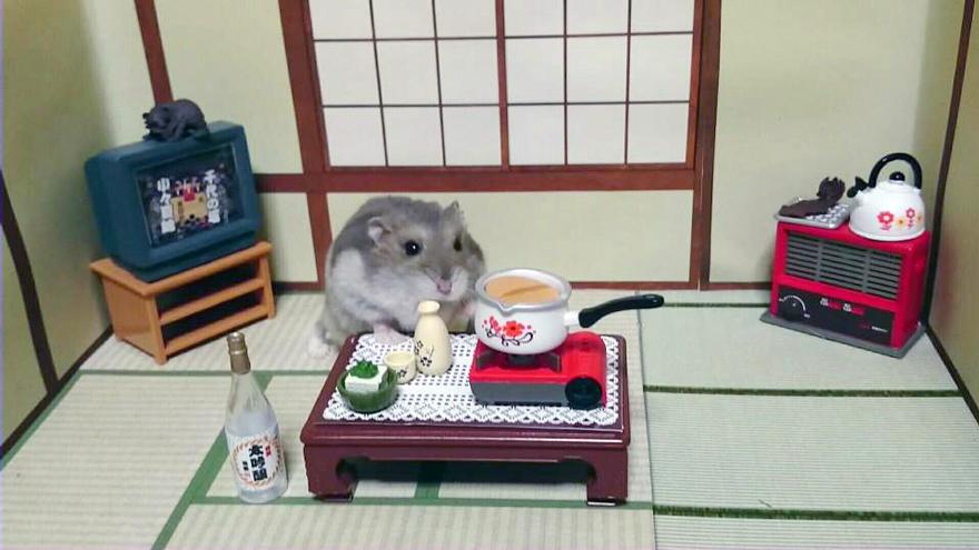 hamster-bartender-miniature-bar-kawanabesatou-20