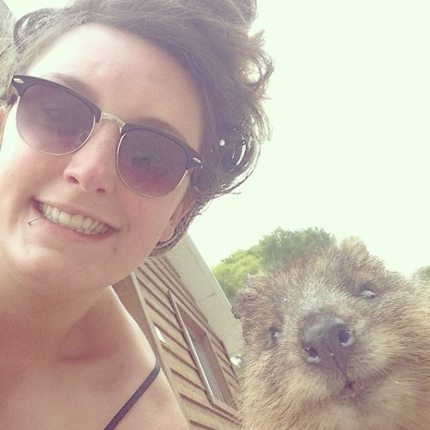 quokka-selfie-trend-cute-rodent-australia-10__605