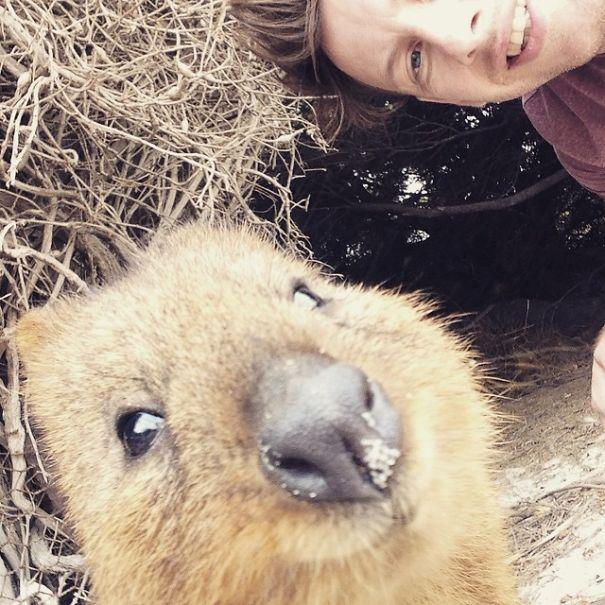 quokka-selfie-trend-cute-rodent-australia-13__605