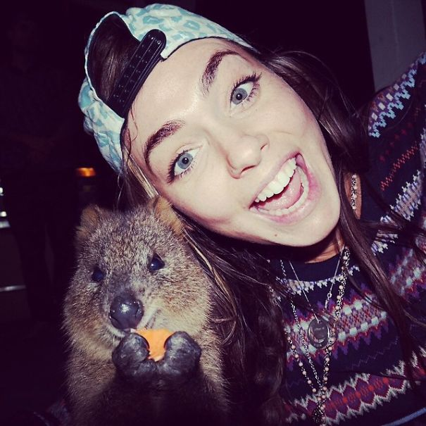 quokka-selfie-trend-cute-rodent-australia-19__605