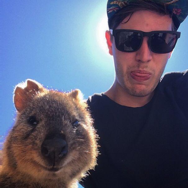 quokka-selfie-trend-cute-rodent-australia-1__605