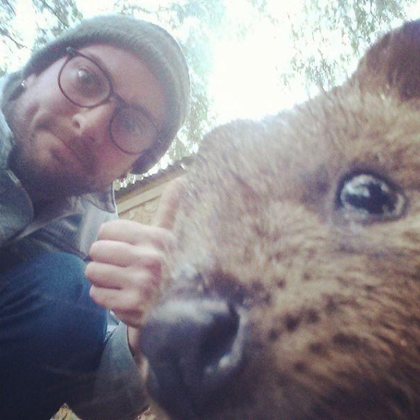 quokka-selfie-trend-cute-rodent-australia-20__605