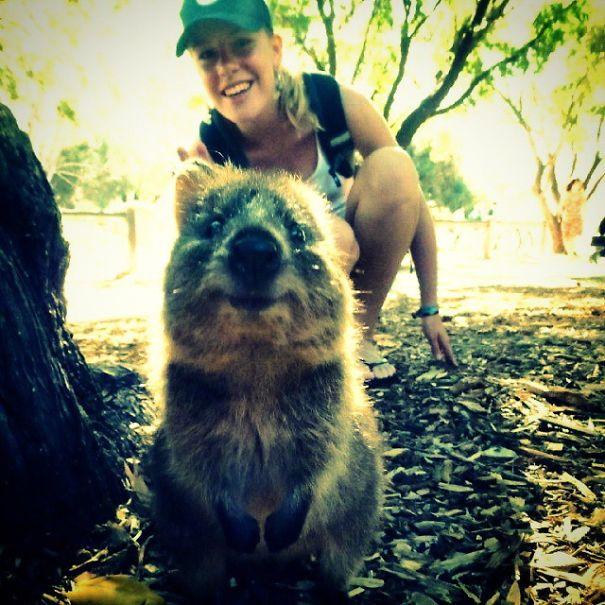 quokka-selfie-trend-cute-rodent-australia-2__605