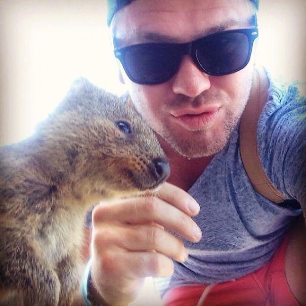 quokka-selfie-trend-cute-rodent-australia-5__605