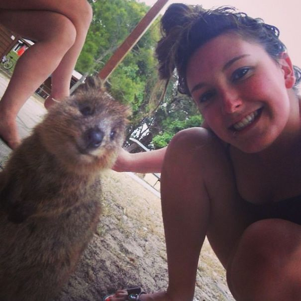 quokka-selfie-trend-cute-rodent-australia-8__605