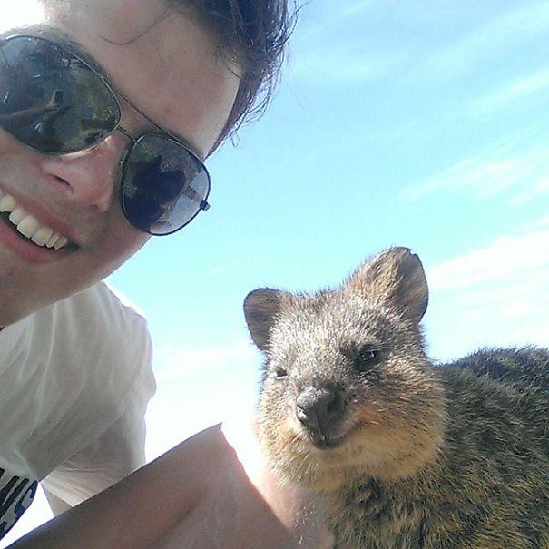 quokka-selfie-trend-cute-rodent-australia-9__605