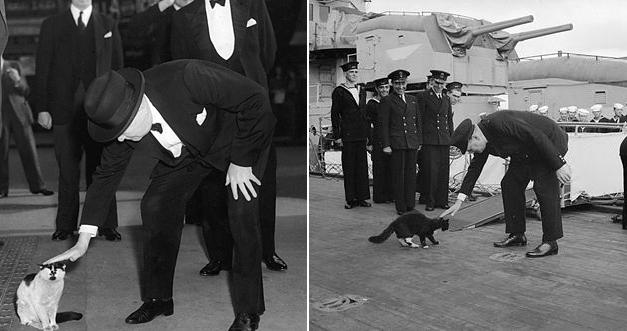Churchill var mikill kattavinur.