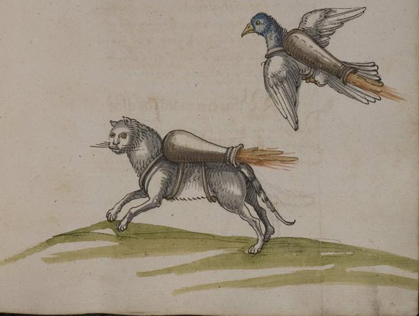 Þotufugl og þotuköttur