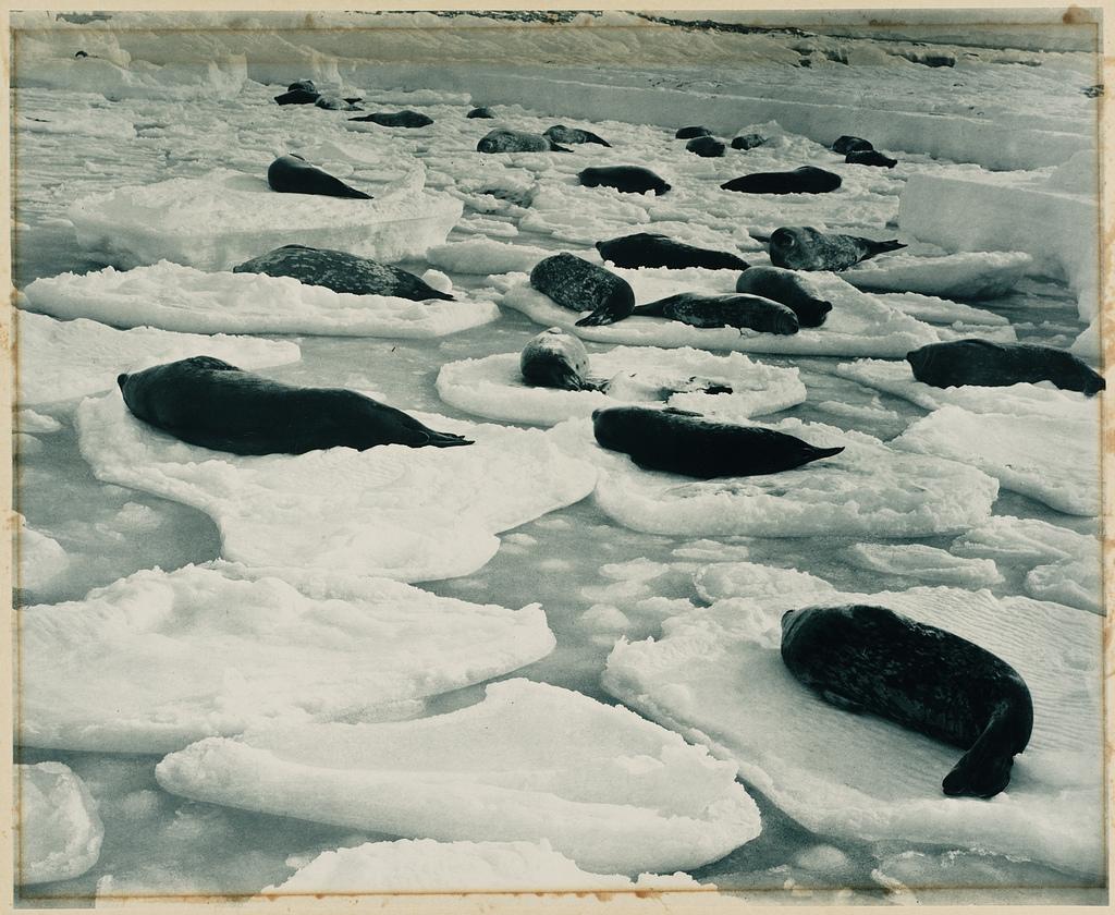 Fotografías de la Antartida hace 100 años 5875902602_15ab04a86c_b