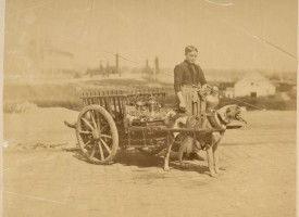Belgískur mjólkursali 1870-1919