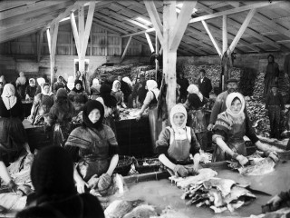 Fiskvinnslukonur vaska saltfisk, um 1910