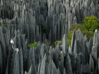 Ógnvænlegur steingerður skógur á Madagaskar