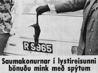 """Minksmorðið í Grafningi: """"Viðurstyggilegt að drepa dýr á þennan hátt"""""""