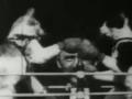 Thomas-Edison-1894-Boxing-cats