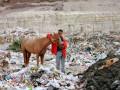 Zabbaleen og hestur