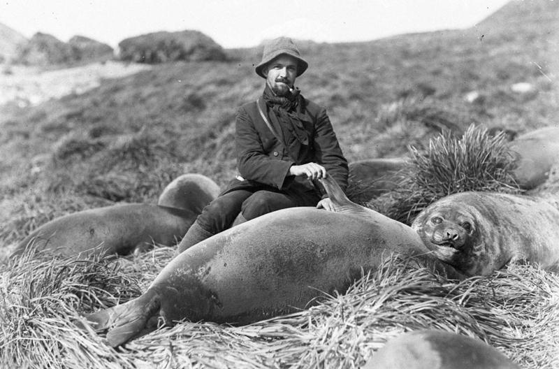 Arthur Sawyer, loftskeytamaður, með ungum sæfílum.
