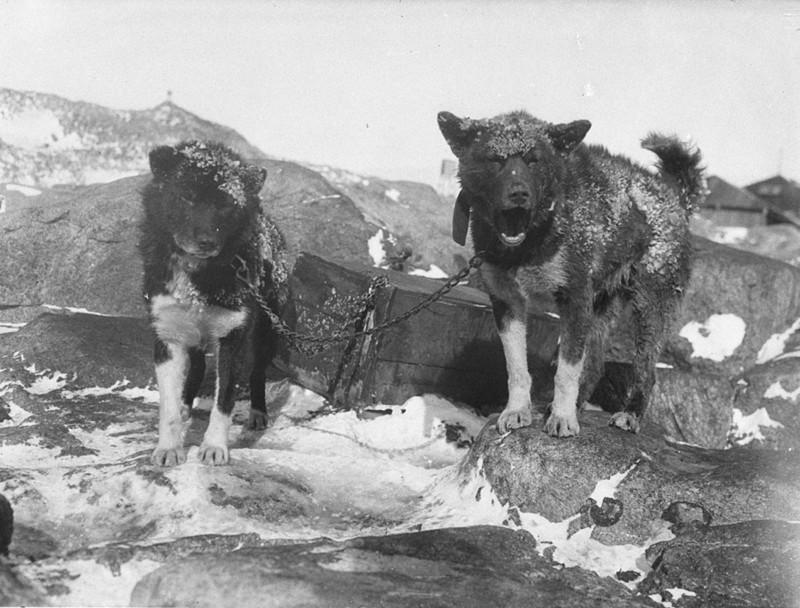 Fotografías de la Antartida hace 100 años Aae_36923r