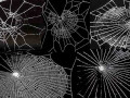 feature-webs