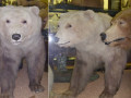 polar-grizzly-hybrid-100602