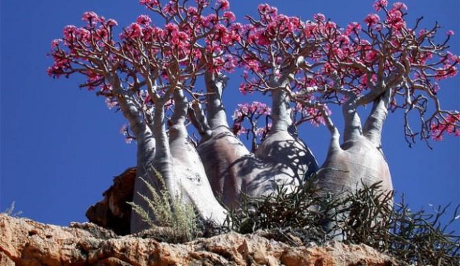 Naturaleza insólita en las Islas Socotra
