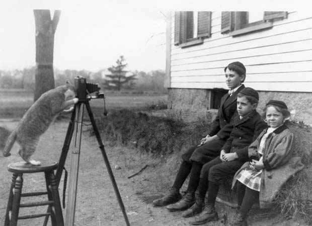Köttur tekur ljósmynd, 1909