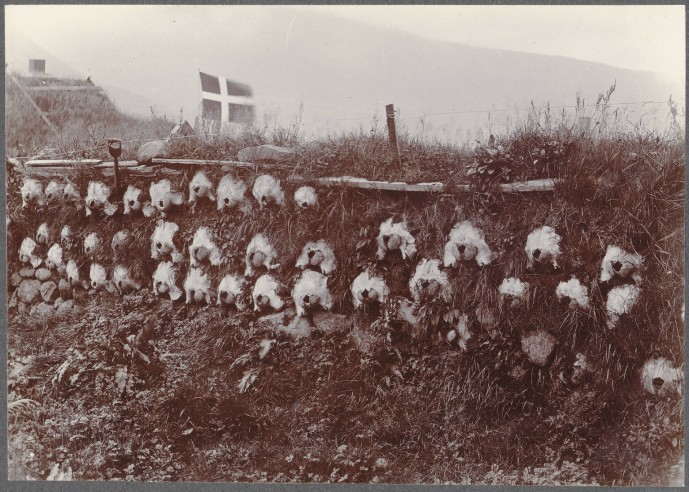 Grindhvalahauskúpuveggur í Færeyjum árið 1900