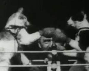Kettir boxa, kvikmynd Edison frá 1894