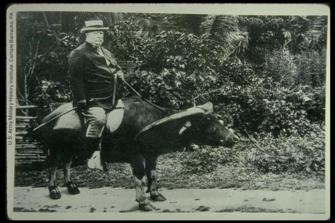 Taft og buffallinn