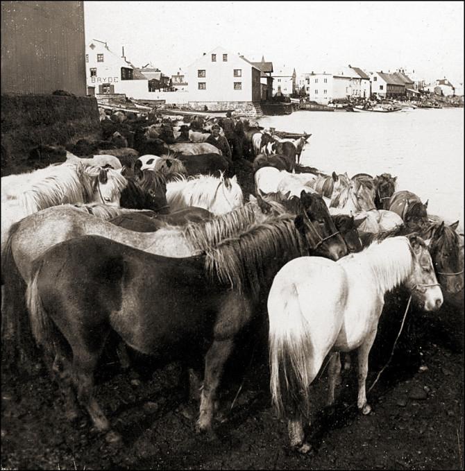 Hross, Reykjavík 1910
