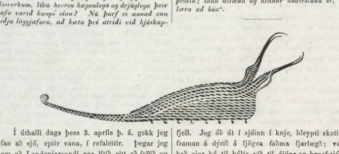 Vitnisburður íslensks bónda um sjávarskrímsli árið 1854