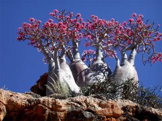 Ójarðnesk náttúra á arabískum Galapagos-eyjum