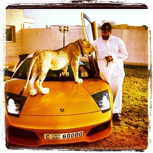 Ljón í Lamborghini: Börn olíufursta á Instagram